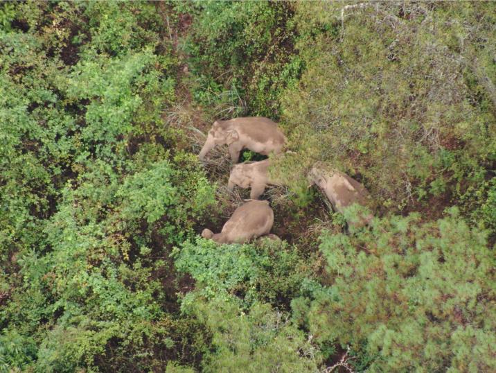 象群今日总体向西迁移
