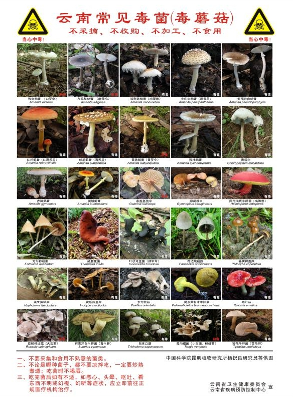 昆明一办公室长出蘑菇上热搜 野生菌可能有毒 千万别随意采食