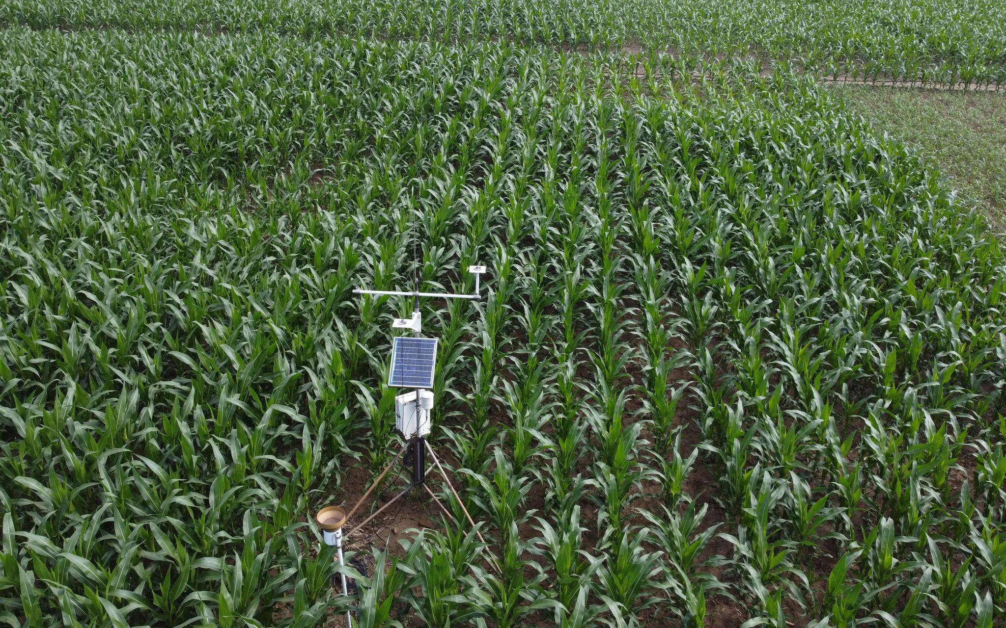旱地农业改变了靠天吃饭的村庄 从亩产几十斤到千斤
