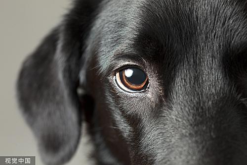 """""""小狗眼""""总能让人心生爱怜。(视觉我国)"""