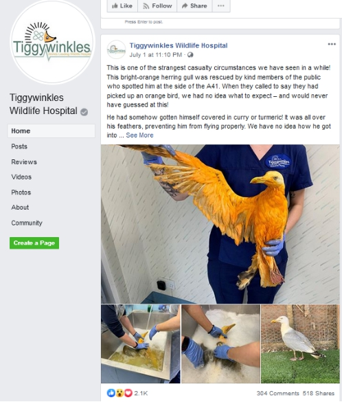 Tiggywinkles野生动物医院脸书截图