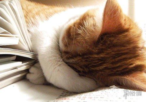 小奶猫睡觉爱平躺神似人类黄贯中浙江卫视 萌图走红网络引无数网友云吸猫