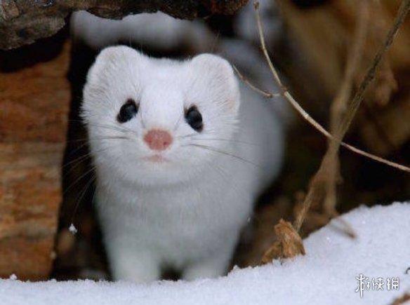 不交配就活不下去!细中新社要数动物世界中的奇葩繁衍