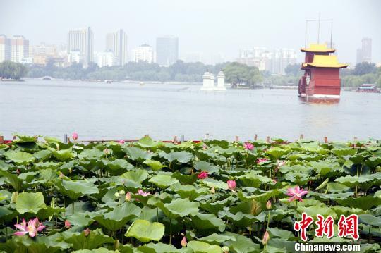 资料图:济南大明湖景区。中新网 孙宏瑗摄