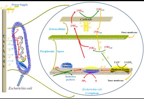 天津工生所微生物电合成研究取得进展
