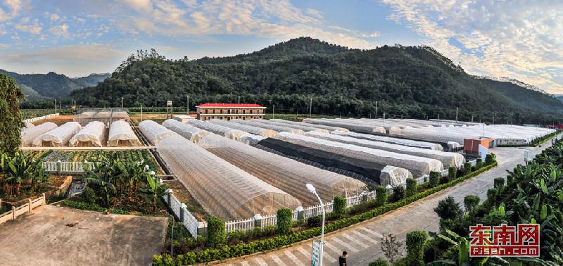 台湾知名企业建设的高优果蔬品种繁育推广基地。龙山镇 供图