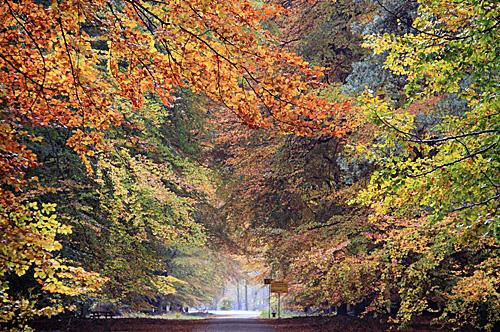 资料图片:荷兰国家森林公园的秋日景象(新华社)