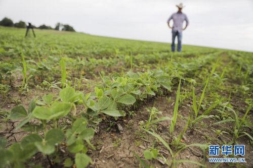 海外网评:近3000万吨美国大豆滞销 怪谁?