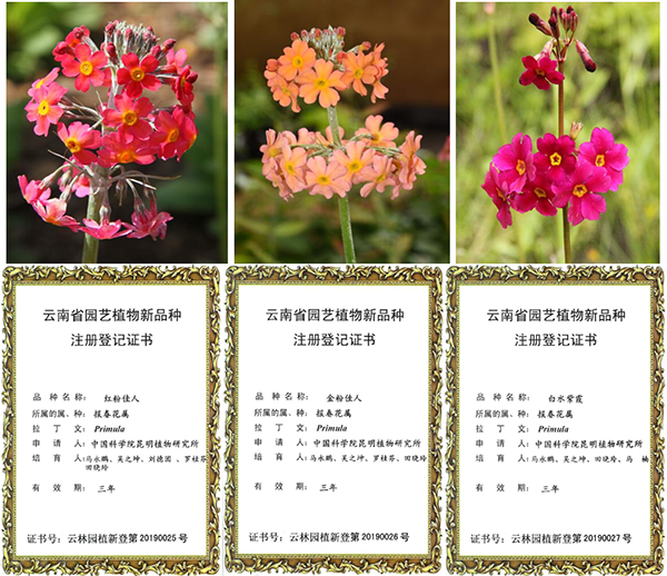 http://www.k2summit.cn/yulemingxing/912461.html