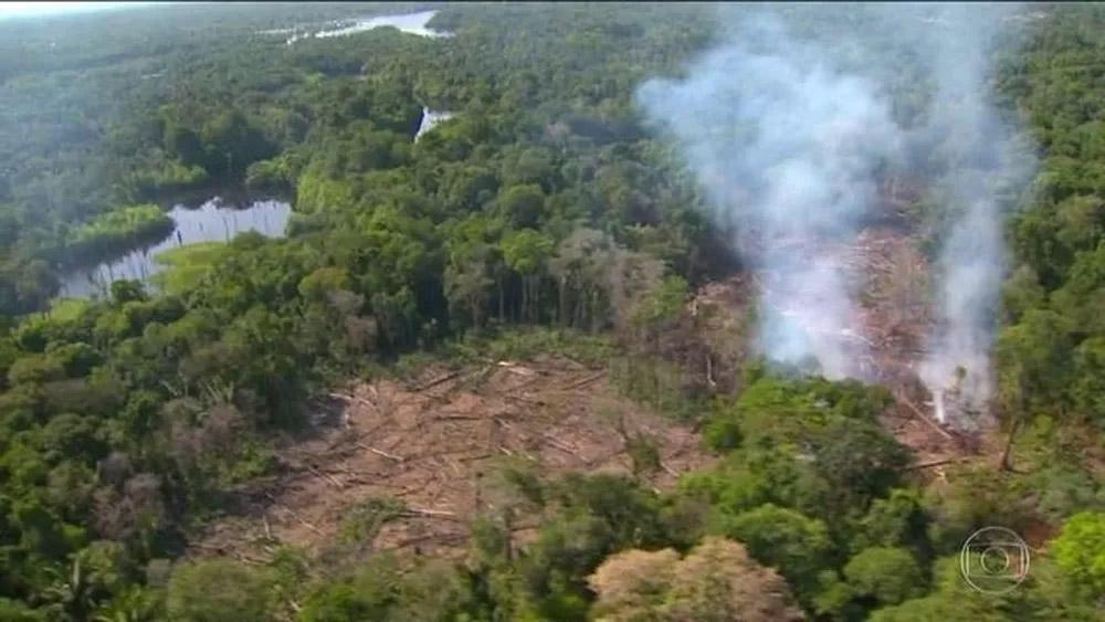 亚马孙砍伐日趋严重 疑与巴西总统言论有关|亚马逊|巴西