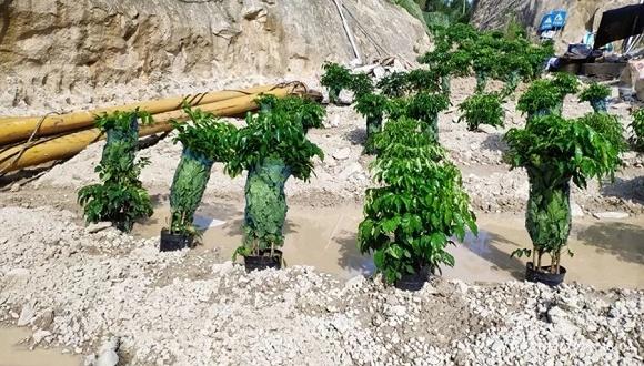 """混凝土地面上铺草皮、红树林枯死归咎病虫害,中央环保督察发现哪些""""奇葩""""案例?"""