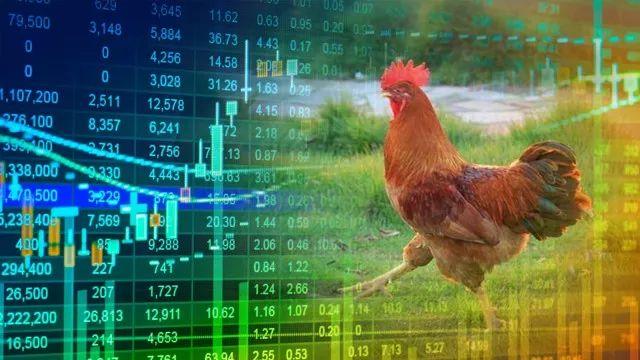 <b>民和股份净利狂飙140倍 二师兄身价大涨成就雏鸡暴利</b>