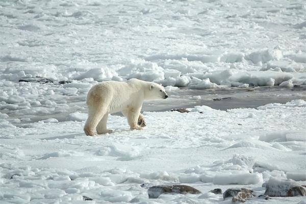 北极多年冰剧变 35年里冰层减少了95%北极冰层宇航局