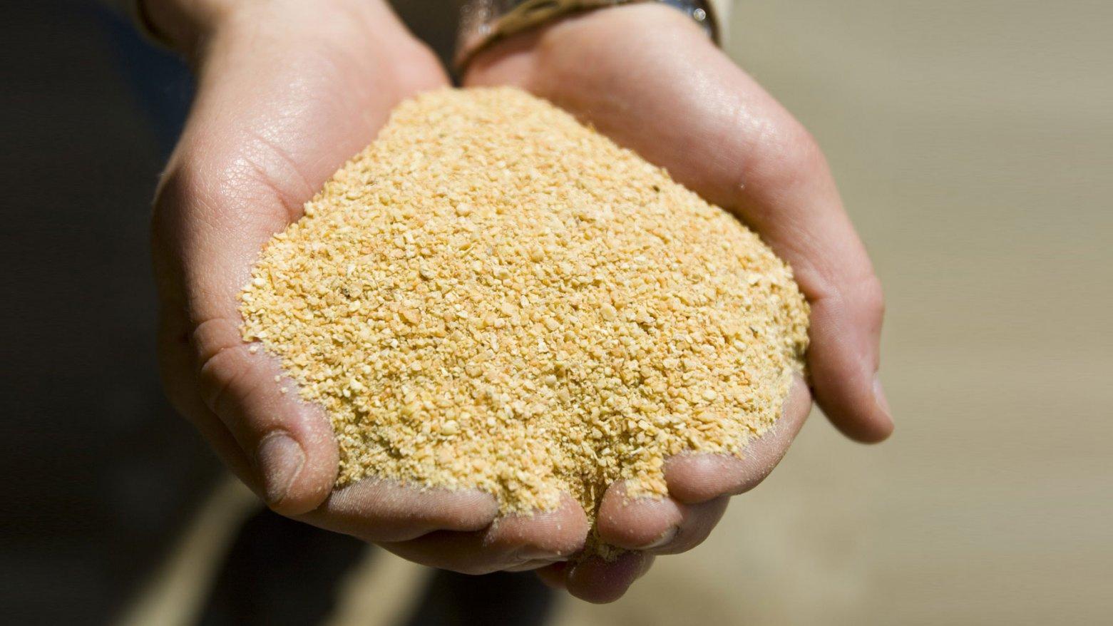 豆粕是年夜豆炼油后下足料,属于优良饲料(图源:养猪业网站Pig333)
