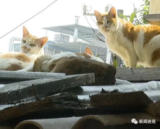 小区内流浪猫接连死亡 居民怀疑有人投毒