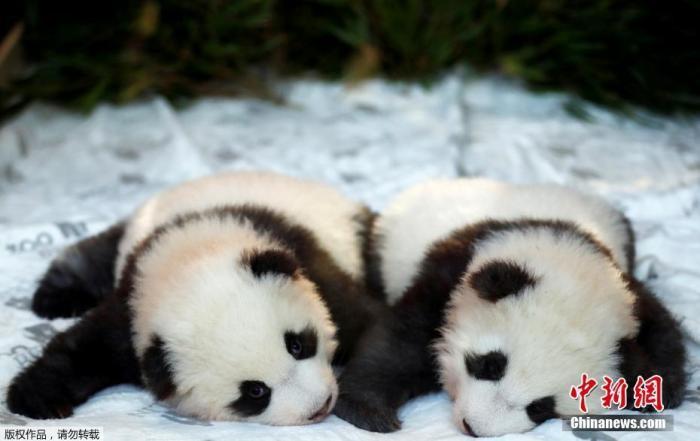 http://www.hljold.org.cn/shehuiwanxiang/348196.html