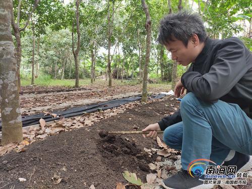 80后小伙毕业后留在海南创业 钻研蚯蚓养殖改良盐碱地