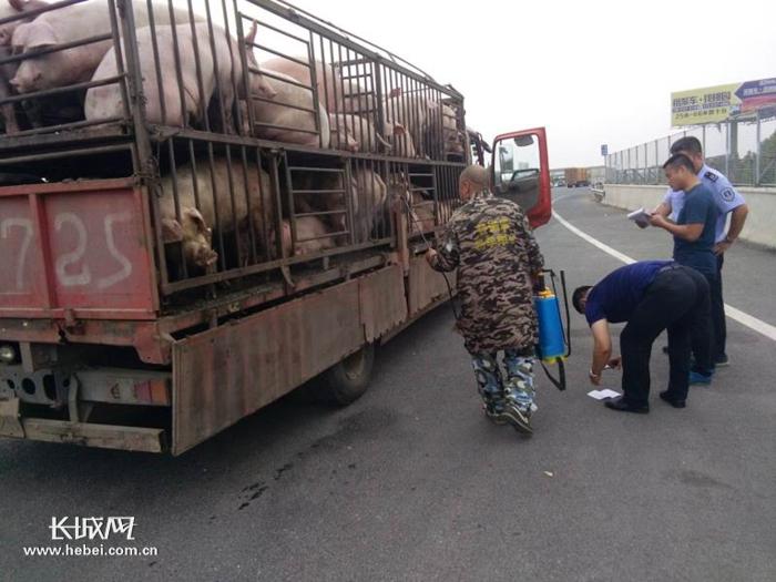 河北:部署多项举措 加强非洲猪