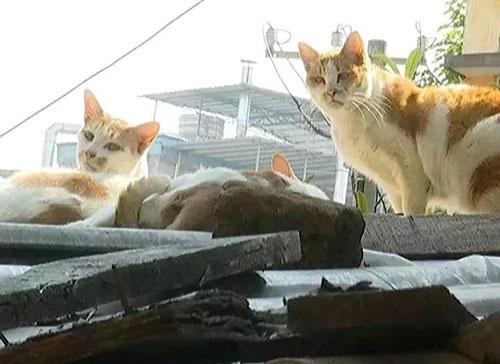 南宁一小区内流浪猫接连死亡,居民怀疑有人投毒……