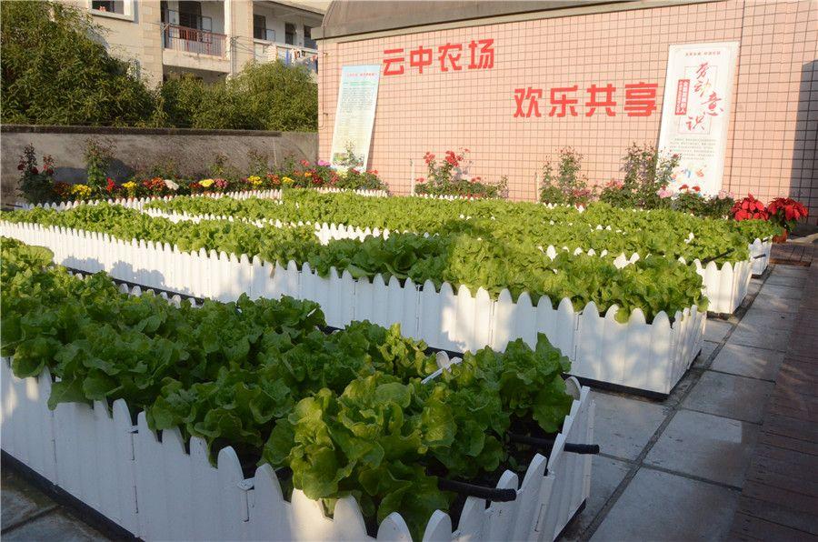 """南宁外国语学校""""云中农场""""劳动实践基地揭牌"""