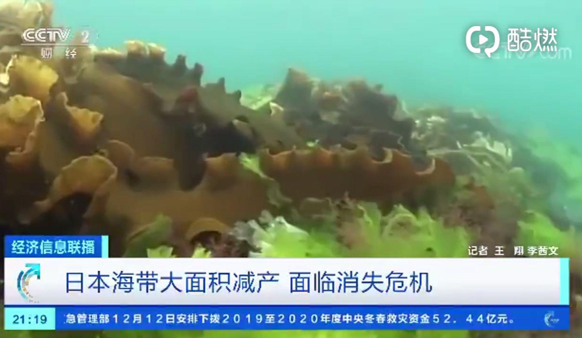 好吃│再不保护环境,好吃有营养的海带可能要消失了