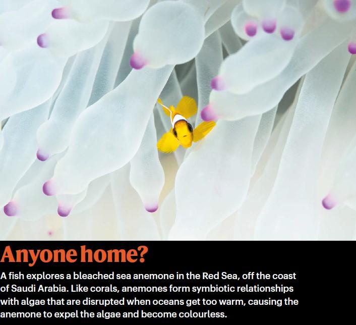 《自然》年度科学图片:首张黑洞照片,威士忌脂肪结构入选