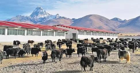 """主播欧阳夏丹:祝""""高帅""""的西藏更加富起来图片"""