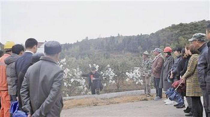 常山:乡村振兴讲堂进油茶林图片