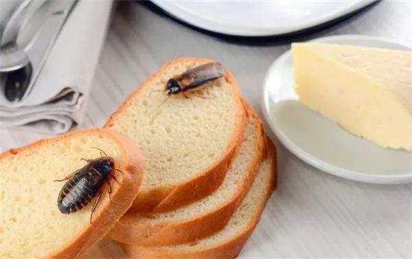 让家中永无蟑螂!家里挤一点它,蟑螂几乎被灭族,长效克制!