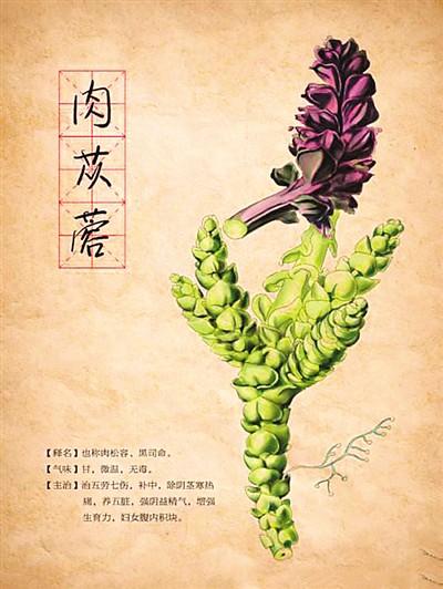 """""""沙漠人参""""——肉苁蓉(杏林寻宝——中华传统医药漫谈)"""