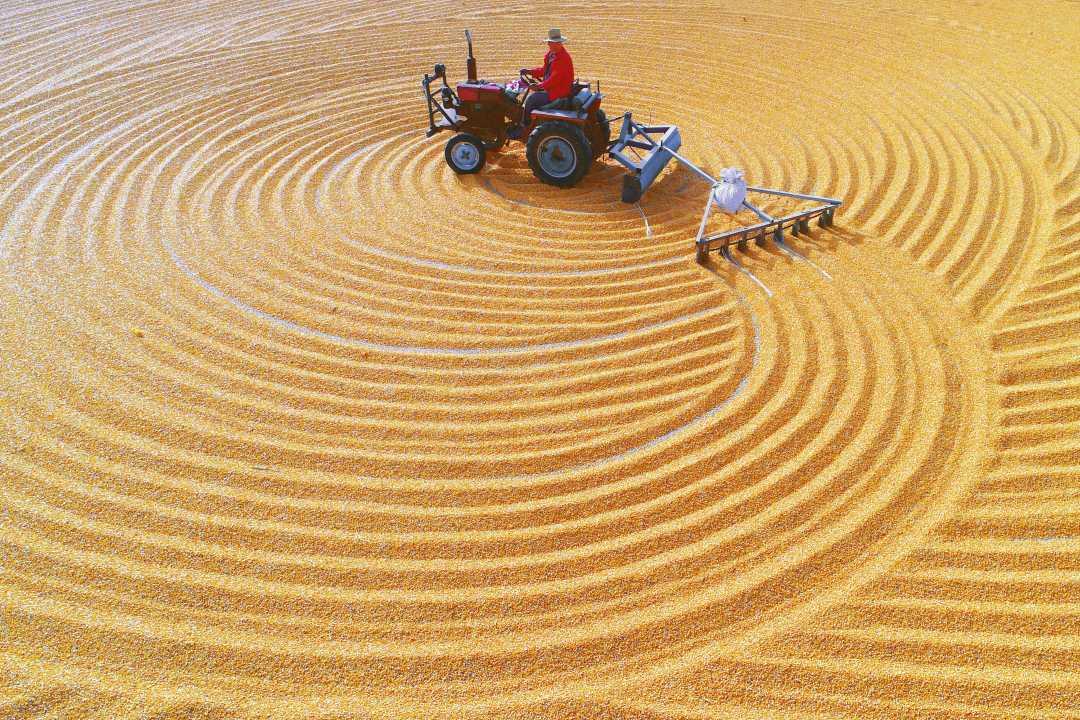 世界粮农组织:世界食品价格指数达两年来最高值