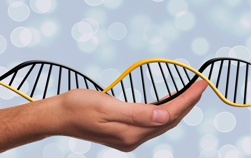 中国科学家揭示人类早期胚胎染色体结构动态