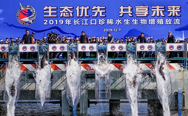 123尾中华鲟踏上回家之旅,上海市长应勇亲手打开放流槽