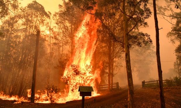 澳大利亚发生140起森林大火 火势