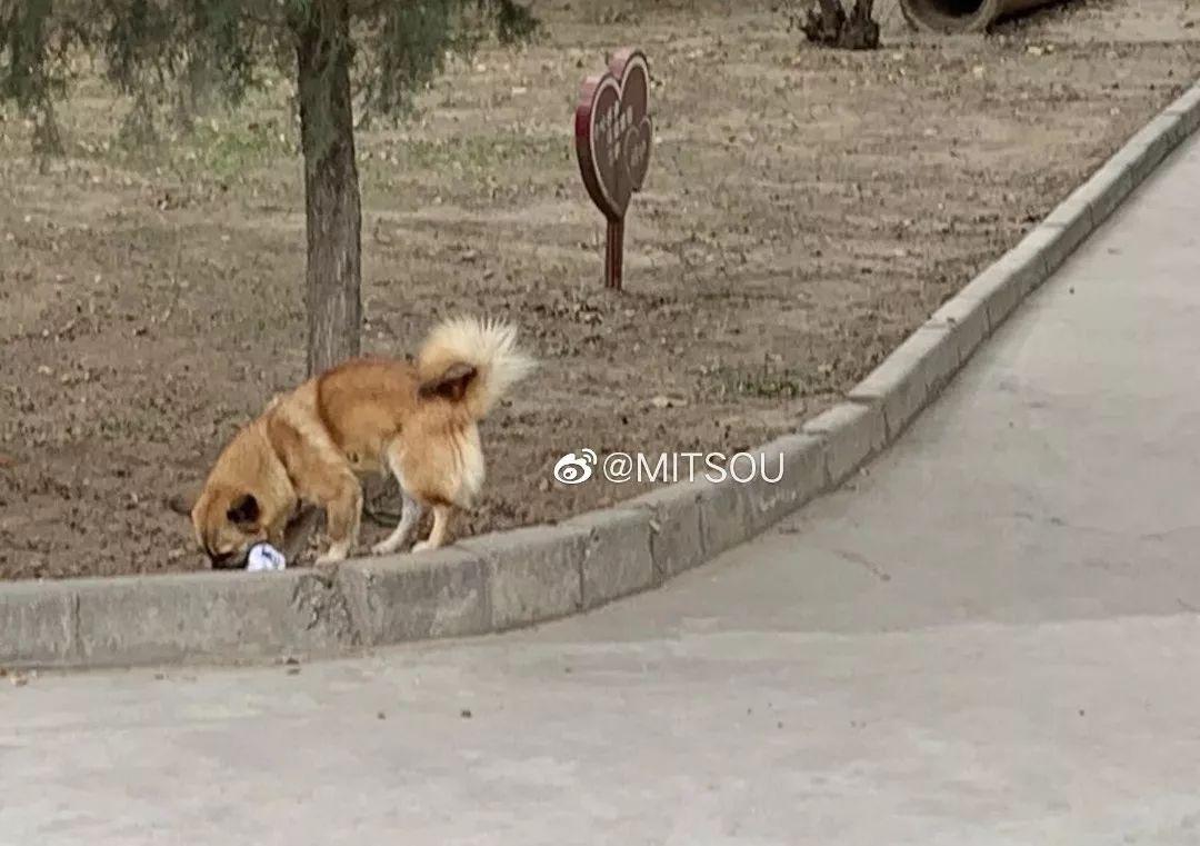 """""""全网通缉这条狗,它把我胸罩叼走了!"""""""