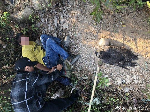 广西北海森警连破多起非法狩猎案,抓获违法犯罪人员11名