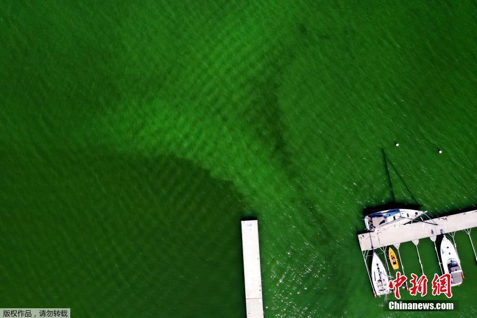 瑞典海岸附近现有毒蓝绿藻