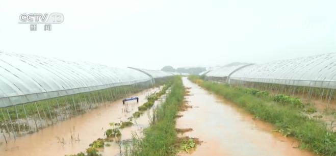 江西:农作物因雨受损严重 当地组织救灾图片