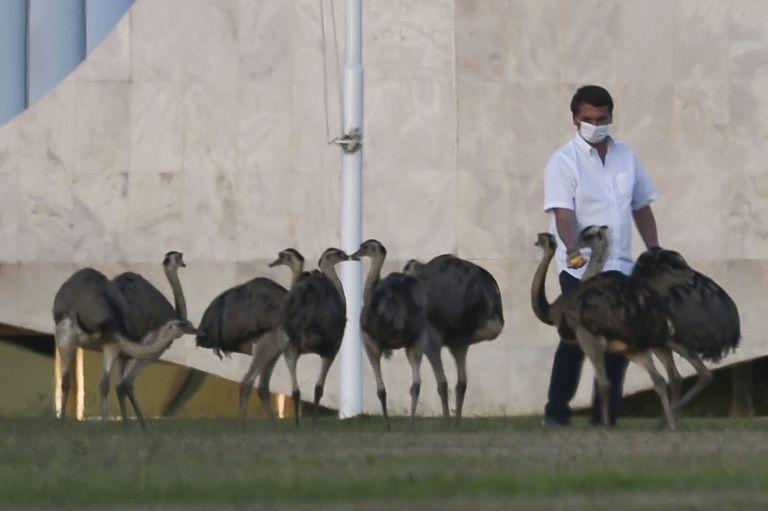 博索纳罗在总统府官邸进行隔离(图源:美联社)