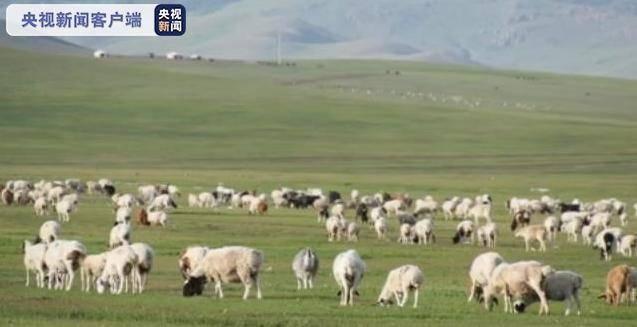 """3万只羊已安排!""""鲜活""""国礼背后还有这些故事"""