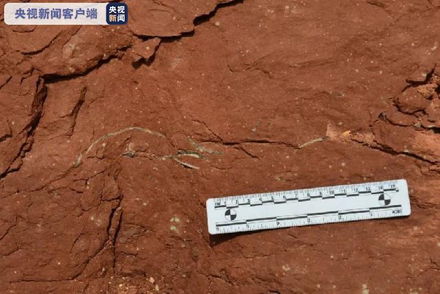 再创新纪录!广东河源发现33枚完整恐龙蛋化石图片