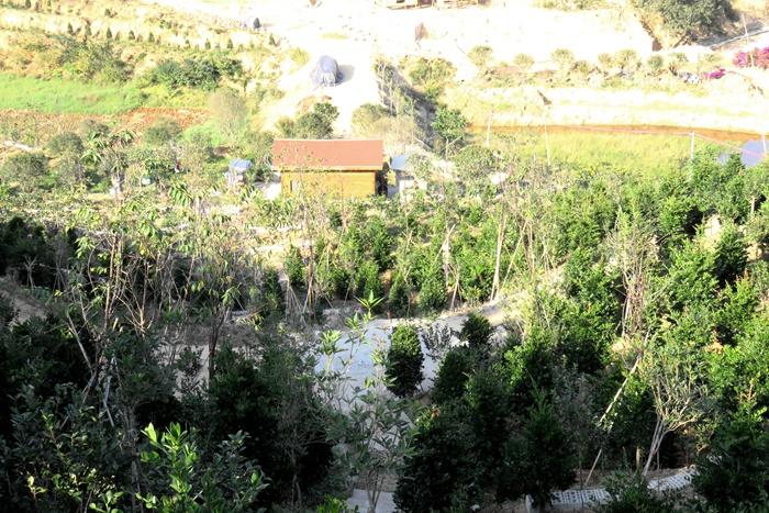 开图为上头前峰发边库周水山抛荒的地开图为下光后风发花旎的旖产扶贫卉业园。