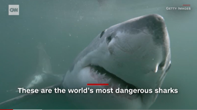 澳大利亚冲浪者遭鲨鱼袭击后失踪 今年已发生6起
