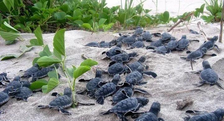 """女博士用 3D 打印 """"卧底""""海龟蛋:装 GPS 骗过偷猎者,还揭发了 137 公里的非法贸易链"""