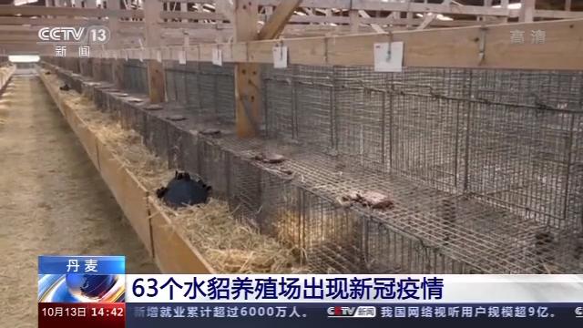 丹麦63个水貂养殖场出现新冠疫情