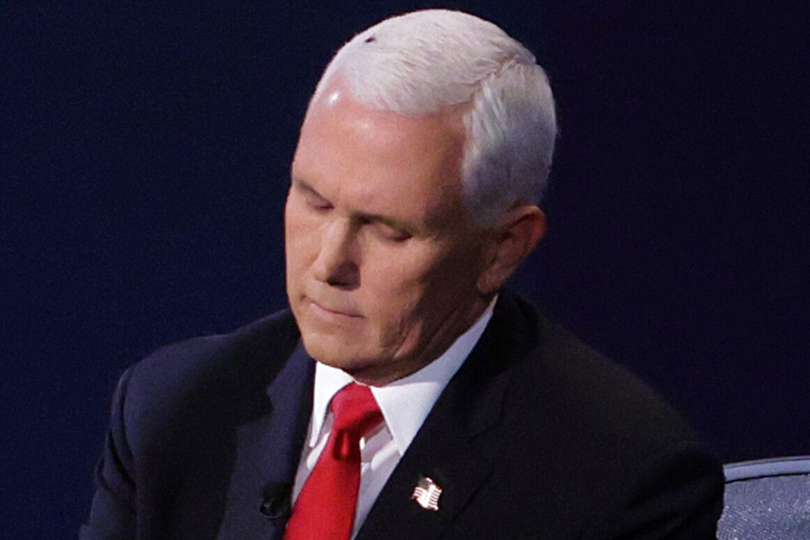 """辩论时苍蝇落头上,彭斯回应:""""我不知道它在那"""""""