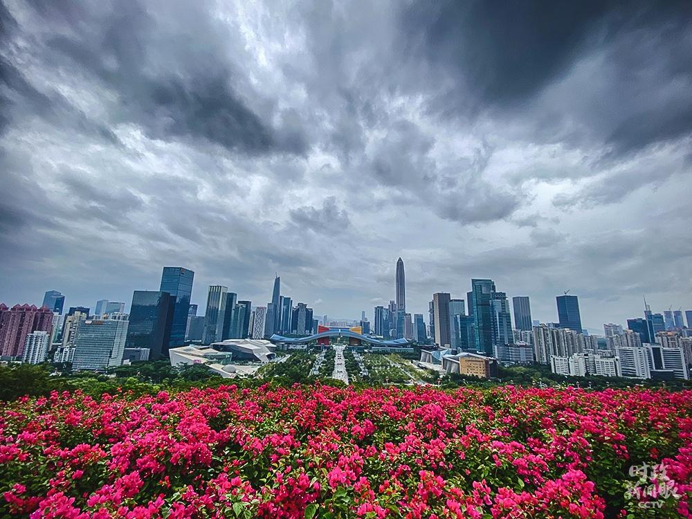 △从莲花山公园俯瞰深圳(总台央视记者李辉拍摄)