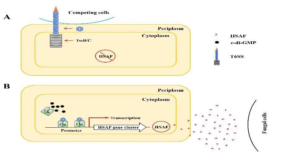 图3 (Yang et al., 2020, PLoS Pathogens)