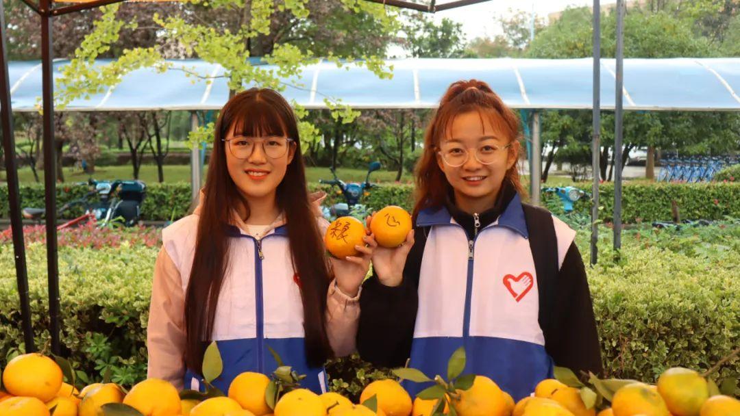 橘子来了!图片