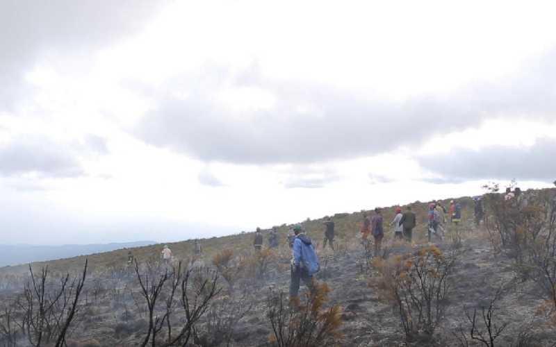 乞力马扎罗山山火导致约公园面积5%的地区受到影响